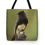 Black Phoebe Tote Bag