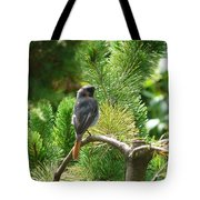 Black Redstart Tote Bag
