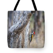 Black-rumped Flameback Aka Lesser Goldenback Tote Bag