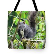 Black Squirrel In The Cherry Tree Tote Bag