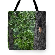 Black Squirrel With Blond Tail  Tote Bag