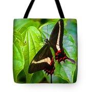 Black Swallowtail Butterfly In Iguazu Falls National Park-brazil  Tote Bag