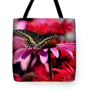 Black Swallowtail Butterfly On Coneflower Square Tote Bag