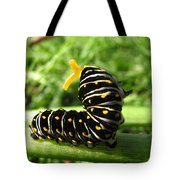 Black Swallowtail Caterpillar Tote Bag