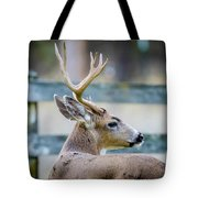 Black-tailed Buck Tote Bag