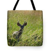 Black-tailed Deer In Tall Meadow Grass Tote Bag