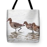 Black-tailed Godwits Tote Bag