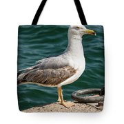 Black Tailed Gull On Dock Tote Bag
