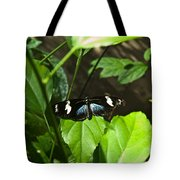 Black Tropical Butterfly Tote Bag