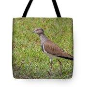 Black-winged Plover Tote Bag