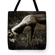 Blackbuck Tote Bag
