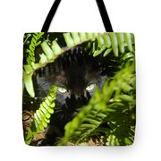 Blackie In The Ferns Tote Bag