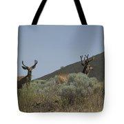Blacktail Deer 2 Tote Bag