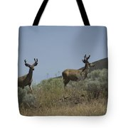 Blacktail Deer 3 Tote Bag