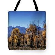 Blazing Cottonwoods Tote Bag
