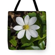 Blood Root Or Blood Wort Tote Bag