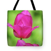 Blooming Dark Pink Tulip Flower Blossom In A Garden Tote Bag
