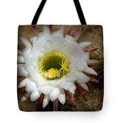 Blooming Hedgehog Cactus Tote Bag