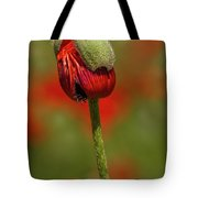 Blooming Orange Poppy Tote Bag