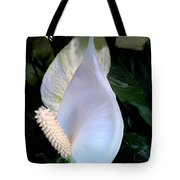 Blooming White Calla Lilies  Tote Bag