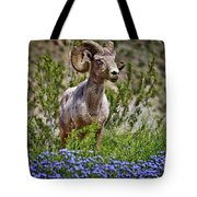 Blooms And Bighorn In Anza Borrego Desert State Park  Tote Bag by Sam Antonio Photography