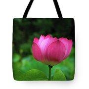 Blossoming Lotus Flower Closeuop Tote Bag