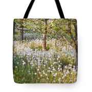 Blossoms Growing In A Fruit Orchard In Tote Bag