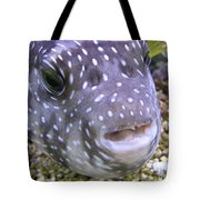 Blow Fish Close-up Tote Bag
