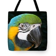 Blue And Gold Macaw Freehand Painting Square Format Tote Bag