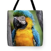 Blue And Yellow Macaw Portrait  Tote Bag
