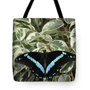 Blue-banded Swallowtail Butterfly Tote Bag