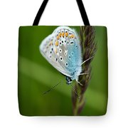 Blue Butterfly On Grass Tote Bag