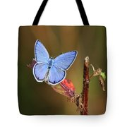Blue Butterfly On Leaf Tote Bag