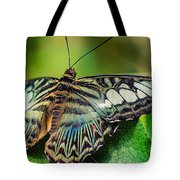 Blue Clipper - Looking Up Tote Bag