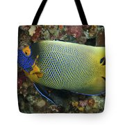 Blue Face Angelfish Tote Bag