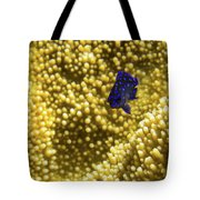 Blue Fish In Coral Tote Bag