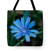 Blue Chicory Flower Tote Bag