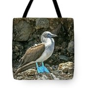Blue Footed Boobie Tote Bag