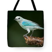 Blue-gray Tanager Thraupis Episcopus Tote Bag
