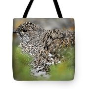 Blue Grouse Hen 1 Tote Bag
