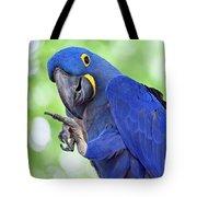 Blue Hyacinth Macaw Tote Bag