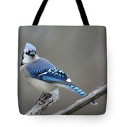Blue Jay 2 Tote Bag