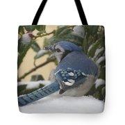 Blue Jay Beauty Tote Bag