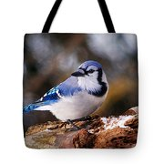 Blue Jay Day Tote Bag