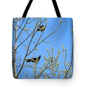 Blue Jay Mobbing A Crow Tote Bag