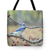 Blue Jay Poses In Crab Apple Tree Tote Bag