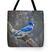 Blue Jay Song Tote Bag
