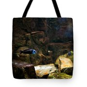 Blue Little Fish In Aquarium Tote Bag