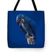 Blue Macaw Tote Bag