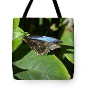 Blue Morpho Among The Leaves Tote Bag